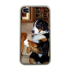 Bernese Mountain Dog Begging Apple iPhone 4 Case (Clear)