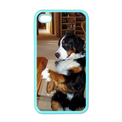 Bernese Mountain Dog Begging Apple iPhone 4 Case (Color)