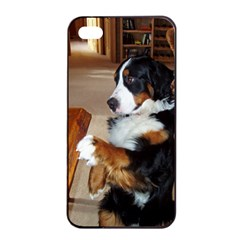 Bernese Mountain Dog Begging Apple iPhone 4/4s Seamless Case (Black)
