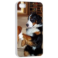 Bernese Mountain Dog Begging Apple iPhone 4/4s Seamless Case (White)