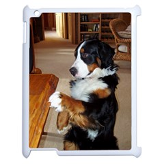 Bernese Mountain Dog Begging Apple iPad 2 Case (White)