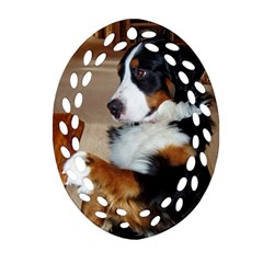 Bernese Mountain Dog Begging Oval Filigree Ornament (Two Sides)