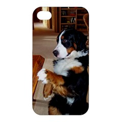 Bernese Mountain Dog Begging Apple iPhone 4/4S Hardshell Case