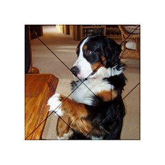 Bernese Mountain Dog Begging Acrylic Tangram Puzzle (4  x 4 )