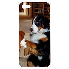 Bernese Mountain Dog Begging Apple iPhone 5 Hardshell Case