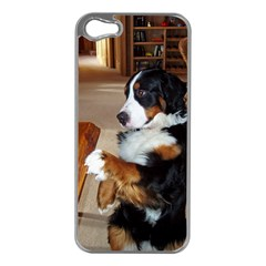 Bernese Mountain Dog Begging Apple iPhone 5 Case (Silver)