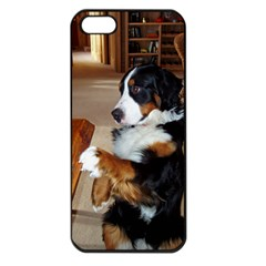 Bernese Mountain Dog Begging Apple iPhone 5 Seamless Case (Black)