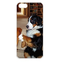 Bernese Mountain Dog Begging Apple iPhone 5 Seamless Case (White)