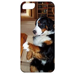 Bernese Mountain Dog Begging Apple iPhone 5 Classic Hardshell Case