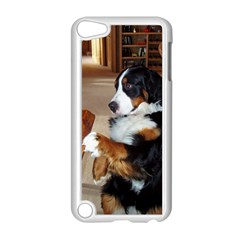 Bernese Mountain Dog Begging Apple iPod Touch 5 Case (White)