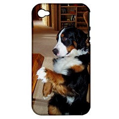 Bernese Mountain Dog Begging Apple iPhone 4/4S Hardshell Case (PC+Silicone)