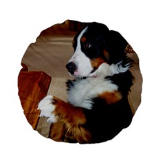 Bernese Mountain Dog Begging Standard 15  Premium Round Cushions