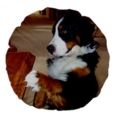 Bernese Mountain Dog Begging Large 18  Premium Round Cushions