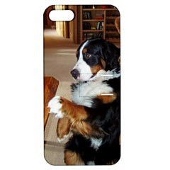 Bernese Mountain Dog Begging Apple iPhone 5 Hardshell Case with Stand