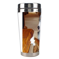 Bernese Mountain Dog Begging Stainless Steel Travel Tumblers