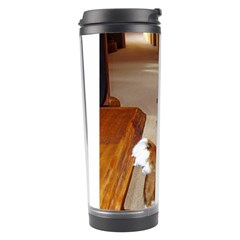 Bernese Mountain Dog Begging Travel Tumbler