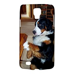 Bernese Mountain Dog Begging Galaxy S4 Active