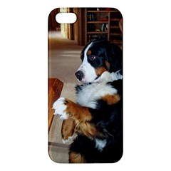 Bernese Mountain Dog Begging iPhone 5S/ SE Premium Hardshell Case