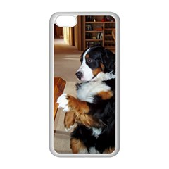 Bernese Mountain Dog Begging Apple iPhone 5C Seamless Case (White)