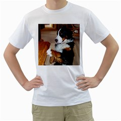 Bernese Mountain Dog Begging Men s T-Shirt (White)