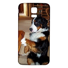 Bernese Mountain Dog Begging Samsung Galaxy S5 Back Case (White)