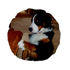 Bernese Mountain Dog Begging Standard 15  Premium Flano Round Cushions