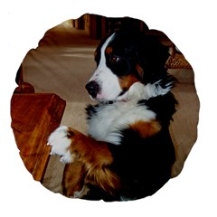 Bernese Mountain Dog Begging Large 18  Premium Flano Round Cushions