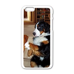 Bernese Mountain Dog Begging Apple iPhone 6/6S White Enamel Case