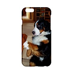 Bernese Mountain Dog Begging Apple iPhone 6/6S Hardshell Case