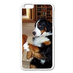 Bernese Mountain Dog Begging Apple iPhone 6 Plus/6S Plus Enamel White Case