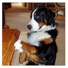 Bernese Mountain Dog Begging Large Satin Scarf (Square)