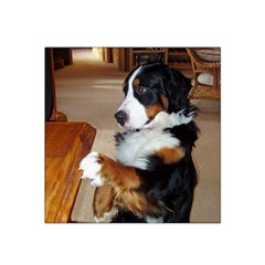 Bernese Mountain Dog Begging Satin Bandana Scarf