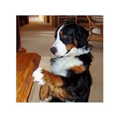 Bernese Mountain Dog Begging Small Satin Scarf (Square)