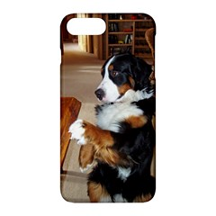 Bernese Mountain Dog Begging Apple iPhone 7 Plus Hardshell Case