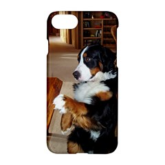 Bernese Mountain Dog Begging Apple iPhone 7 Hardshell Case