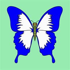 Draw Butterfly Green Blue White Fly Animals Canvas 12  x 12