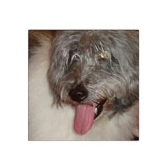 Old English Sheepdog Satin Bandana Scarf