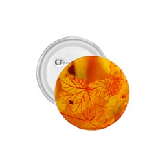 Bright Yellow Autumn Leaves 1 75  Buttons
