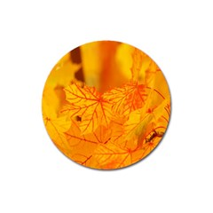 Bright Yellow Autumn Leaves Magnet 3  (round)
