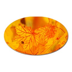 Bright Yellow Autumn Leaves Oval Magnet