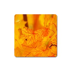 Bright Yellow Autumn Leaves Square Magnet