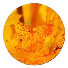 Bright Yellow Autumn Leaves Magnet 5  (round)