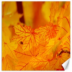 Bright Yellow Autumn Leaves Canvas 20  X 20