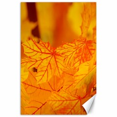 Bright Yellow Autumn Leaves Canvas 24  X 36