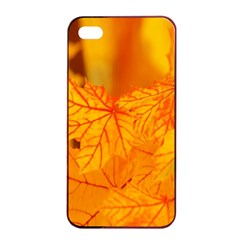 Bright Yellow Autumn Leaves Apple Iphone 4/4s Seamless Case (black)