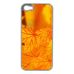 Bright Yellow Autumn Leaves Apple Iphone 5 Case (silver)