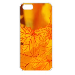 Bright Yellow Autumn Leaves Apple Iphone 5 Seamless Case (white)