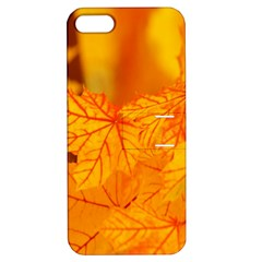 Bright Yellow Autumn Leaves Apple Iphone 5 Hardshell Case With Stand