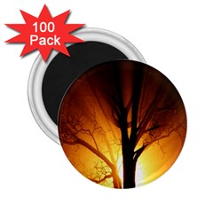 Rays Of Light Tree In Fog At Night 2.25  Magnets (100 pack)