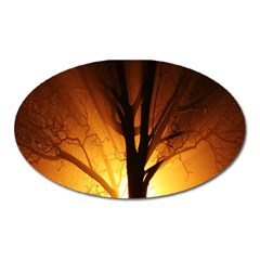 Rays Of Light Tree In Fog At Night Oval Magnet